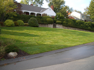 NEWLY SODDED FRONT LAWN    Similar to a newly seeded lawn, sod requires frequent watering to aid successful establishment.