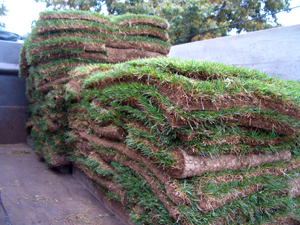FOLDED PIECES OF SOD    Sod strips folded and stacked on pallets. Most retailers sell sod in 1-yard strips that are 6 feet long x 1.5 feet wide (9 square feet).