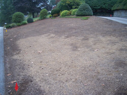Preparation for sodding - A sod cutter was used to remove this old lawn. Then screened topsoil was spread to fill-in low and uneven areas. Soil at pavement edges was left 1-inch lower than the pavement to allow for the thickness of the sod.
