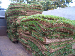 Sod delivery - Two pallets of sod (100 square yards) was enough to cover 900 square feet of lawn area. This sod was cut in 1/2-yard pieces, each one measuring 18-inches by 3-feet. Sod shouldn't be left stacked on pallets any longer than necessary.