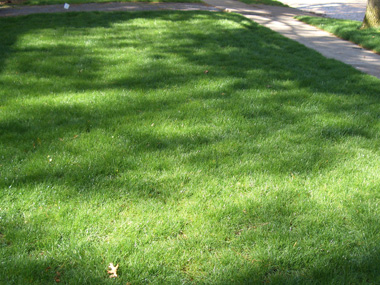 Starting over - Sometimes trying to patch-up an old lawn just isn't worth it. Total lawn renovation involves removing the old lawn and starting fresh. Autumn is the best season for renovations.