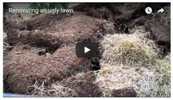 Lawn renovation video - Click here to see
