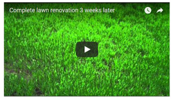 Same lawn 3-weeks later - Click here to see
