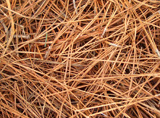 Pine straw - Pine needle mulch is typically seen more often in southern United States landscapes. Can be a fire hazard with lit cigarette butts.