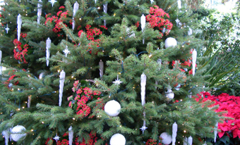 decorated-christmas-tree.jpg