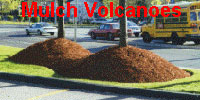Avoid piling-up mulch against tree trunks!