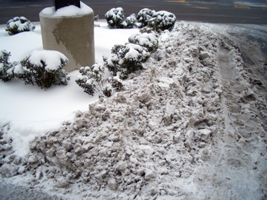 Snow with salt gets plowed into shrub beds in parking lots