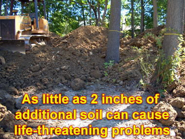 soil-fill-over-roots.jpg