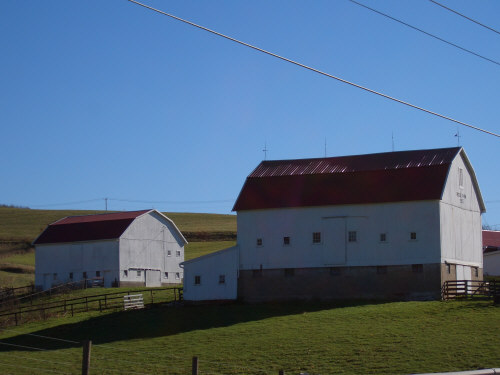 Handsome pair of red-roof Barns