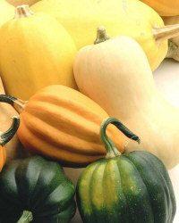 Colorful squash collection
