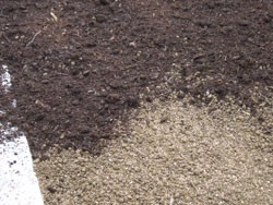 Topdress your newly seeded areas with mushroom manure or another suitable topdressing like clean straw. -