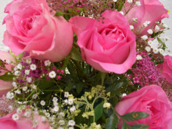 Pink Rose - Pink roses are given to express appreciation, happiness and admiration.