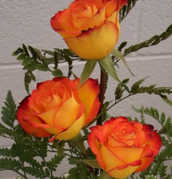 Orange Rose - Orange roses are given to express enthusiasm, desire and fascination.