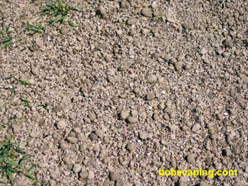 "The area was then seeded with a ""shade mix"" consisting mostly of Fescues. ""Starter"" fertilizer was also applied to encourage new and existing lawn grasses."