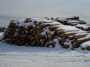 Saw logs - Saw logs are stockpiled according to the wood type.