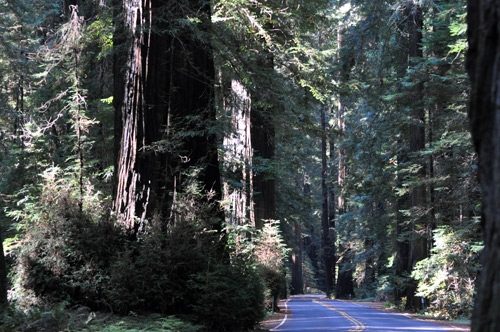 northern-california-redwoods.jpg