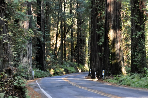 HRSP-Redwoods-Road2.jpg