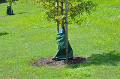 Slow release watering bags for trees  work great!