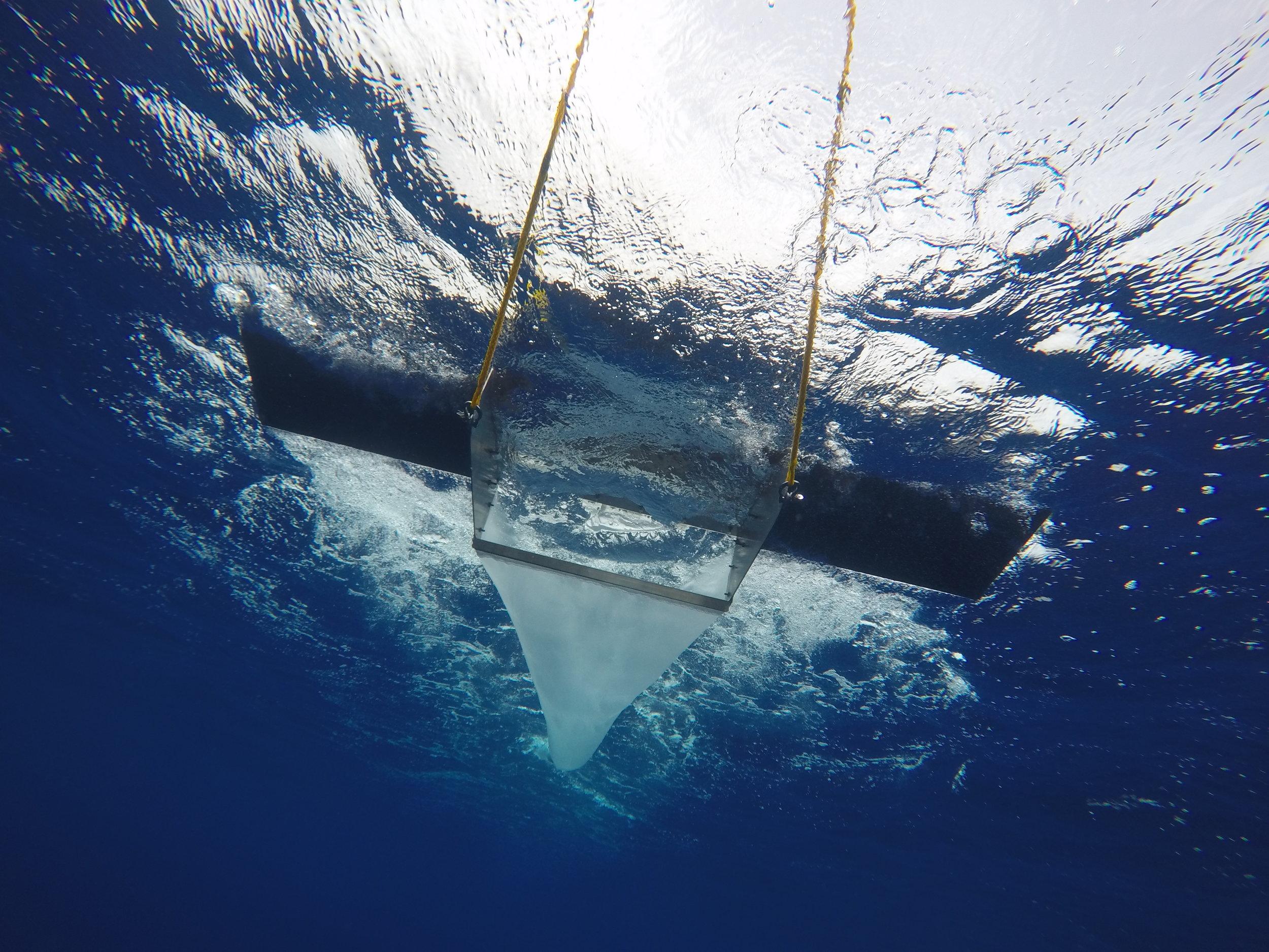 MUESTREOS DE ESPECIES Y SEGUIMIENTO DE DESECHOS MARINOS - Para gestionar y proteger con éxito la biodiversidad en torno a la cuenca balear, llevamos a cabo un seguimiento constante de ballenas, delfines, tortugas marinas, atunes y aves marinas. Actualmente, también estamos investigando las partículas de microplástico que se encuentran el Mediterráneo.