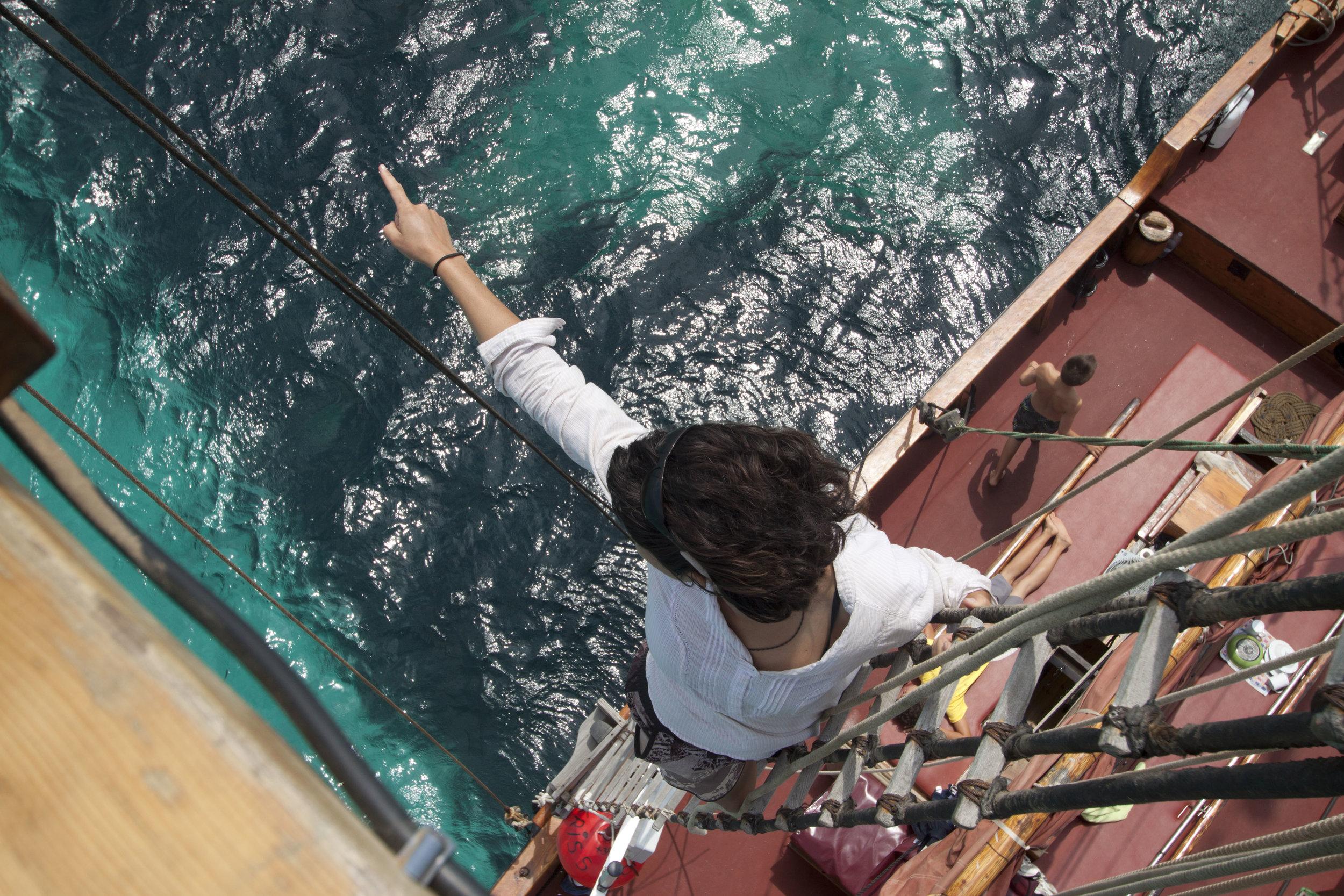 CIENCIA CIUDADANA Y PROYECTOS UNIVERSITARIOS - Nuestro programa de ciencia ciudadana es una gran oportunidad para aprender acerca de diferentes temas científicos marinos y al mismo tiempo contribuir a una causa que vale la pena. Nuestros cursos pueden satisfacer las necesidades de estudiantes y graduados, en biología marina y oceanografía, proporcionando experiencia de campo y créditos universitarios.