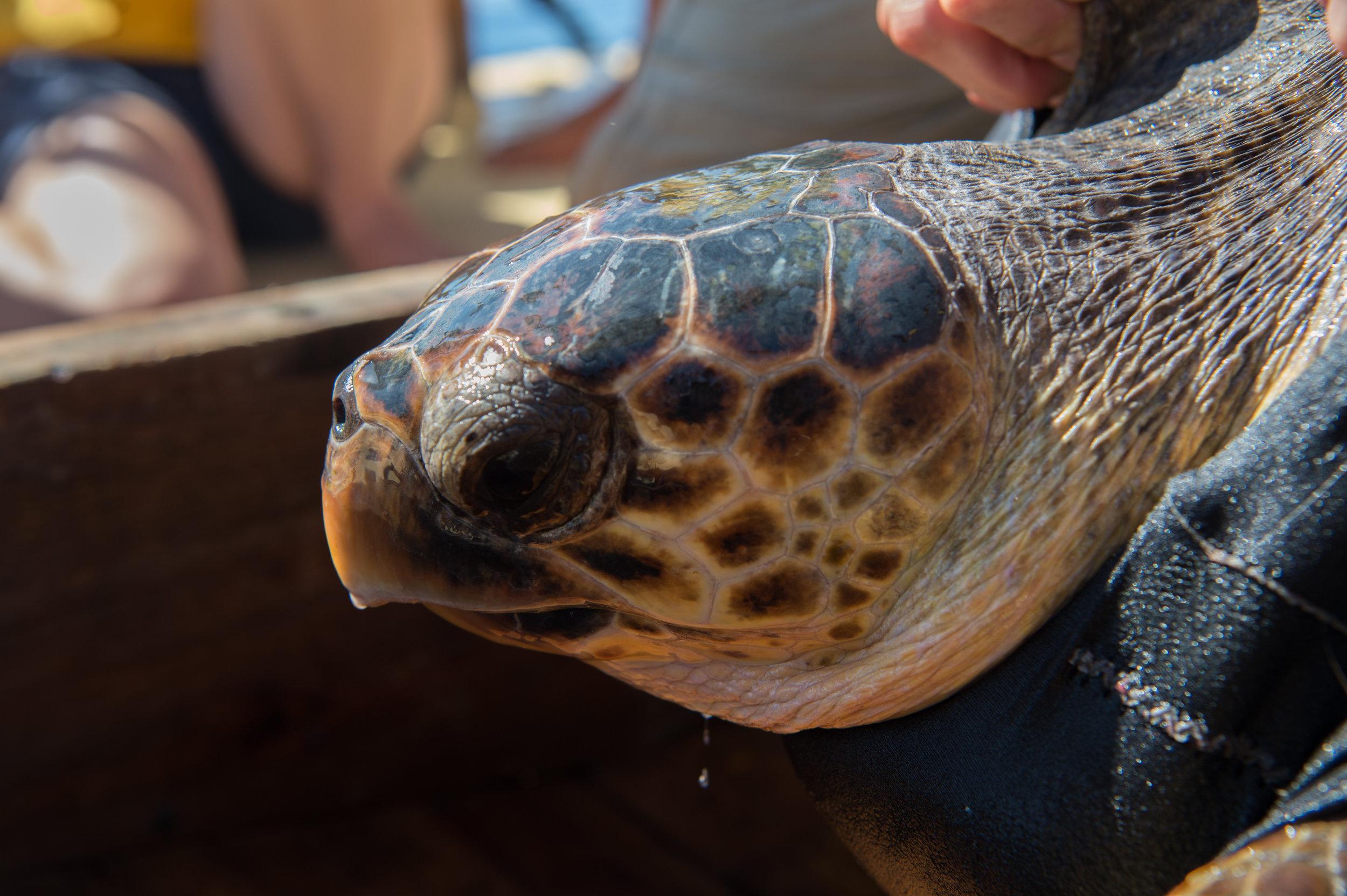Turtle411 (14 von 92).jpg