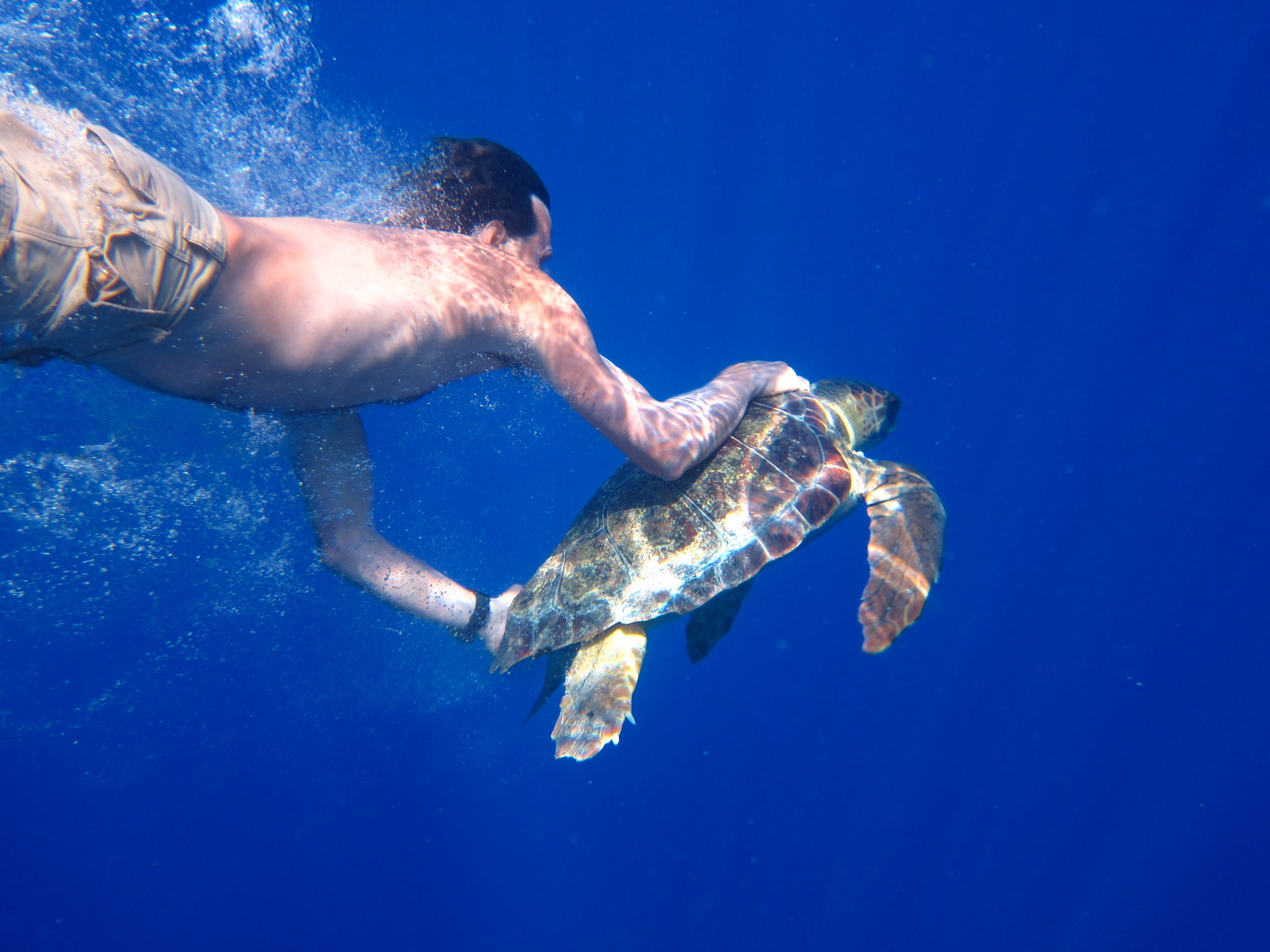 ADOPT A TURTLE -