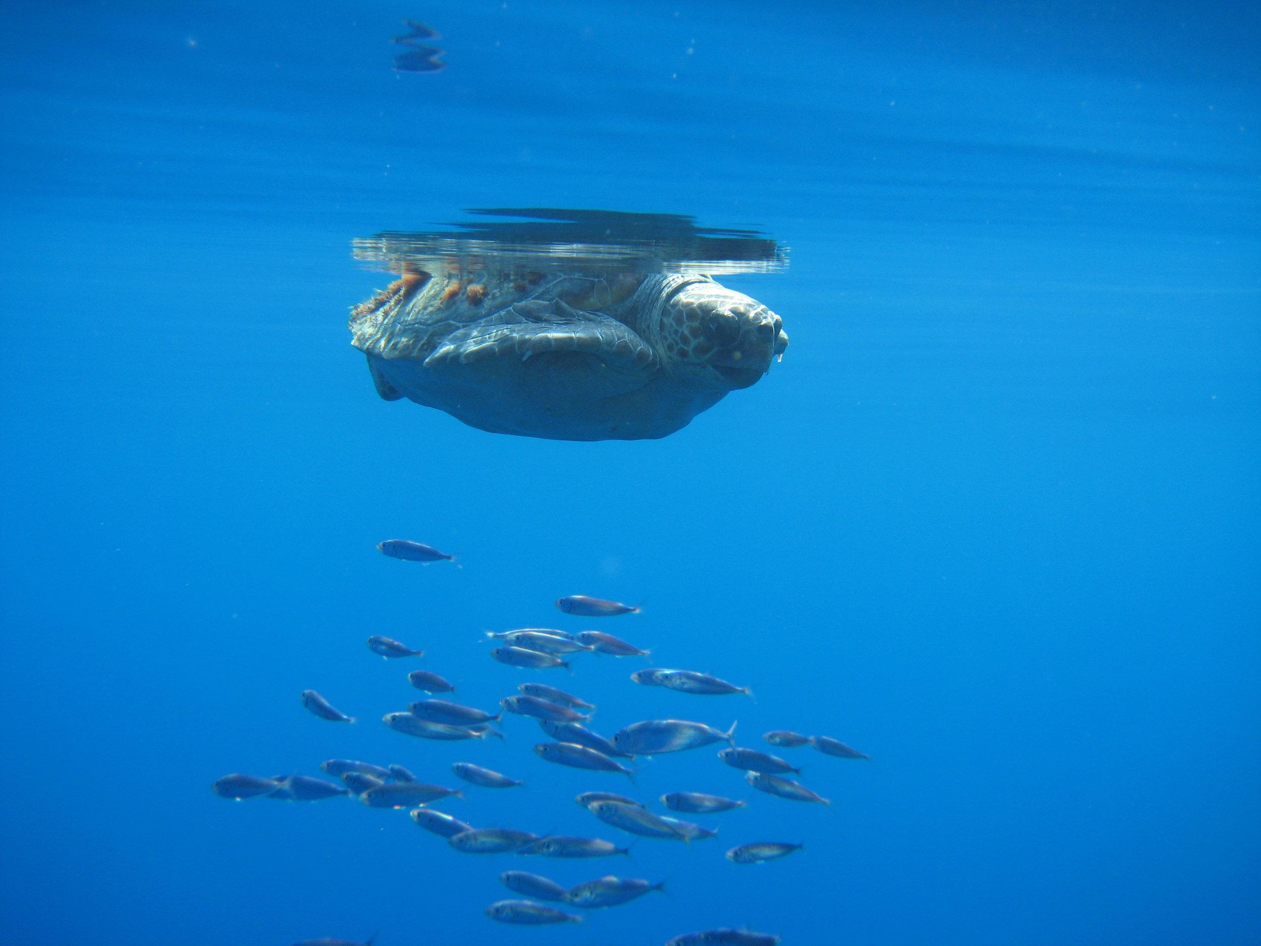 Turtle416 (50 von 68).jpg