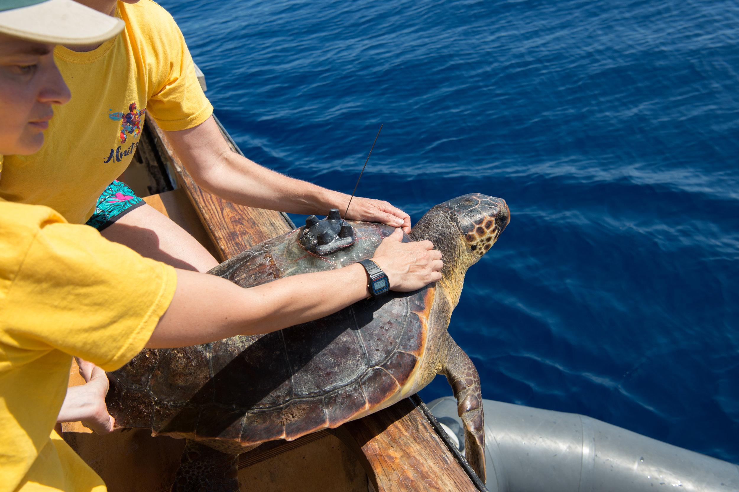 Turtle411 (70 von 92).jpg