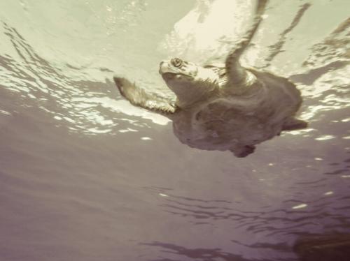Leer el diario de una tortuga