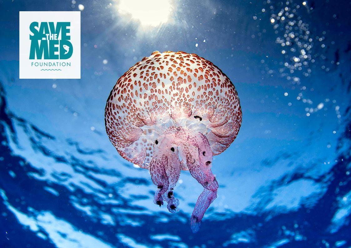 Fundación Save the Med - ¡Somos más fuertes juntos! Este año nuestra colaboración con la Fundación Save the Med se ha convertido en una asociación para salvar nuestros océanos.