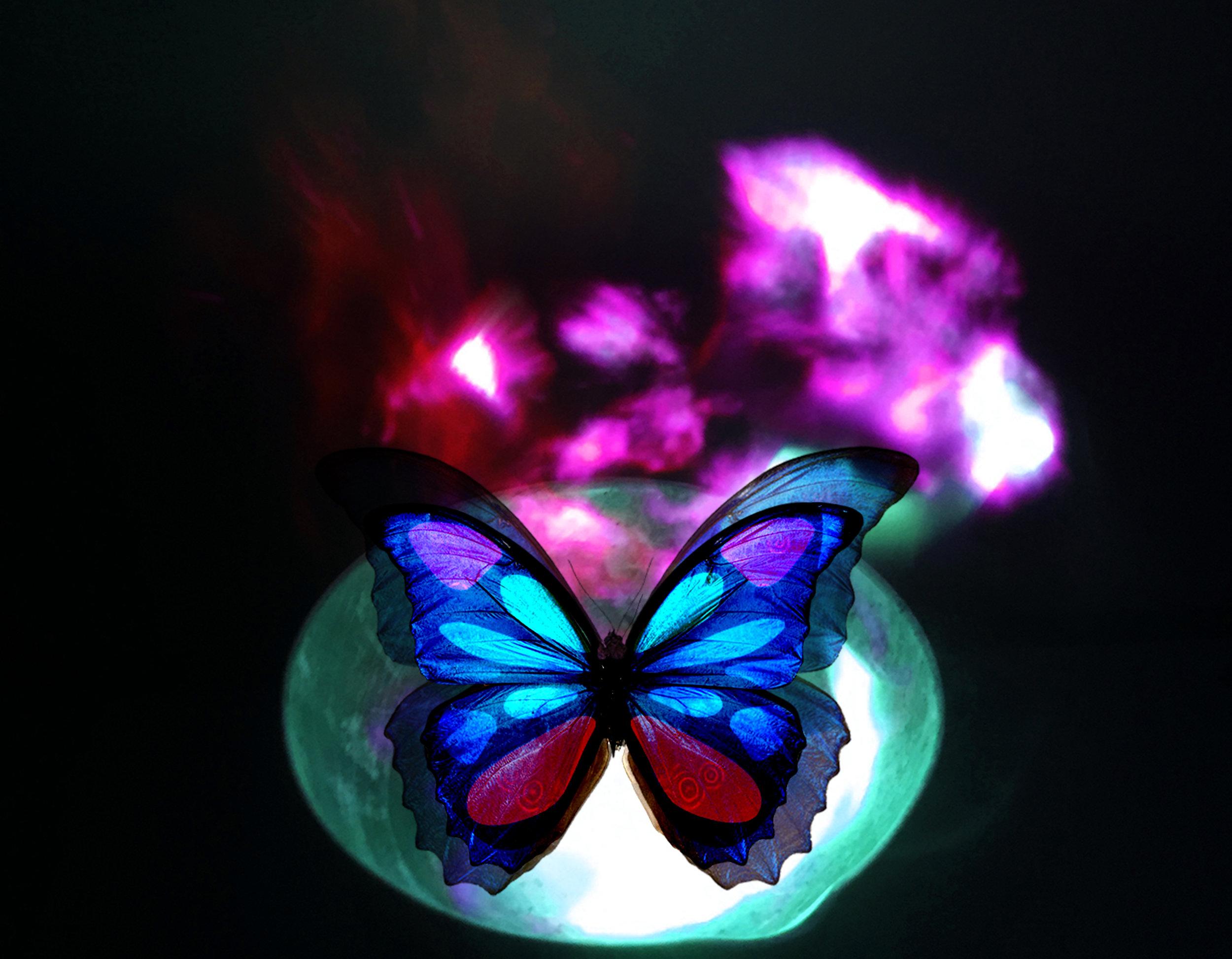 vivid flutter hero image.jpg