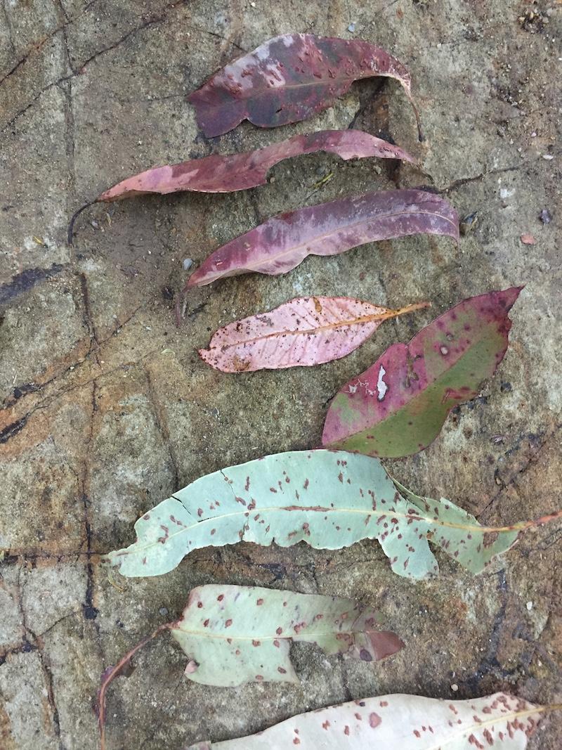 Ellie Beck Petalplum Leaf mandala at the creek.JPG