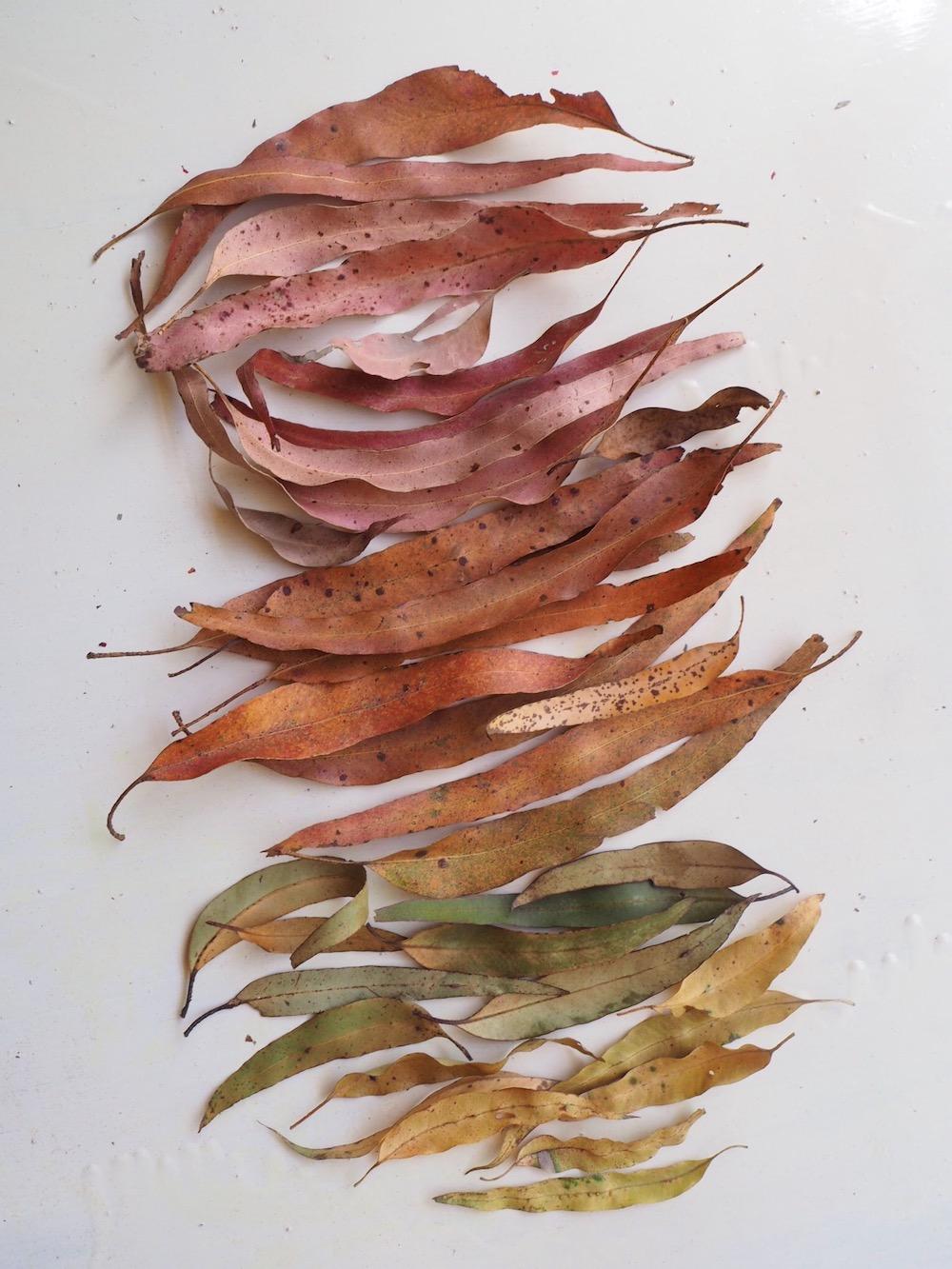 Ellie Beck Petalplum leaf mandala ombre colour change.jpeg
