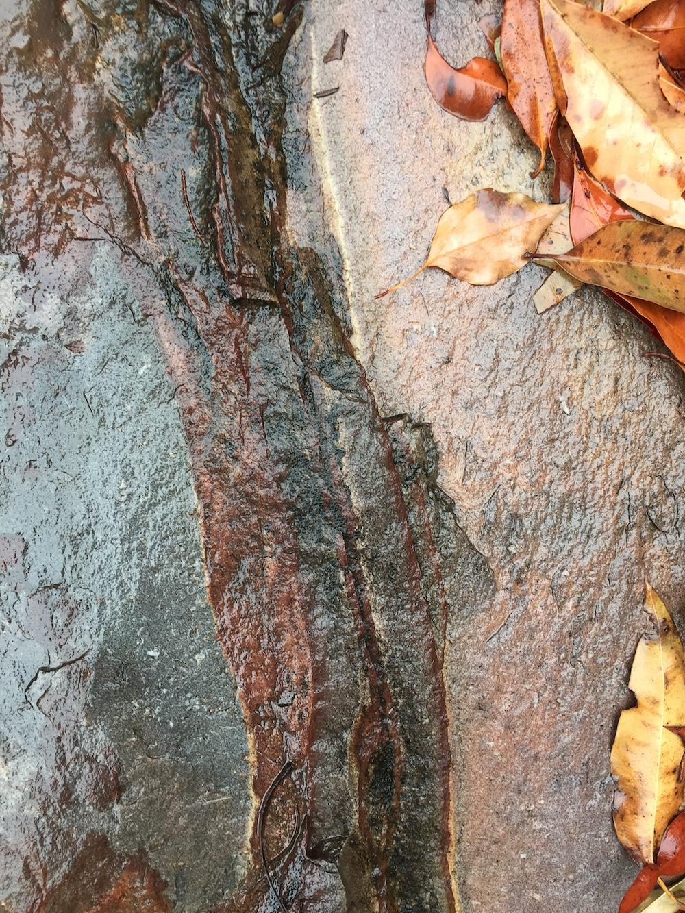 Ellie Beck Petalplum Rocks eco-printing inspiration.JPG