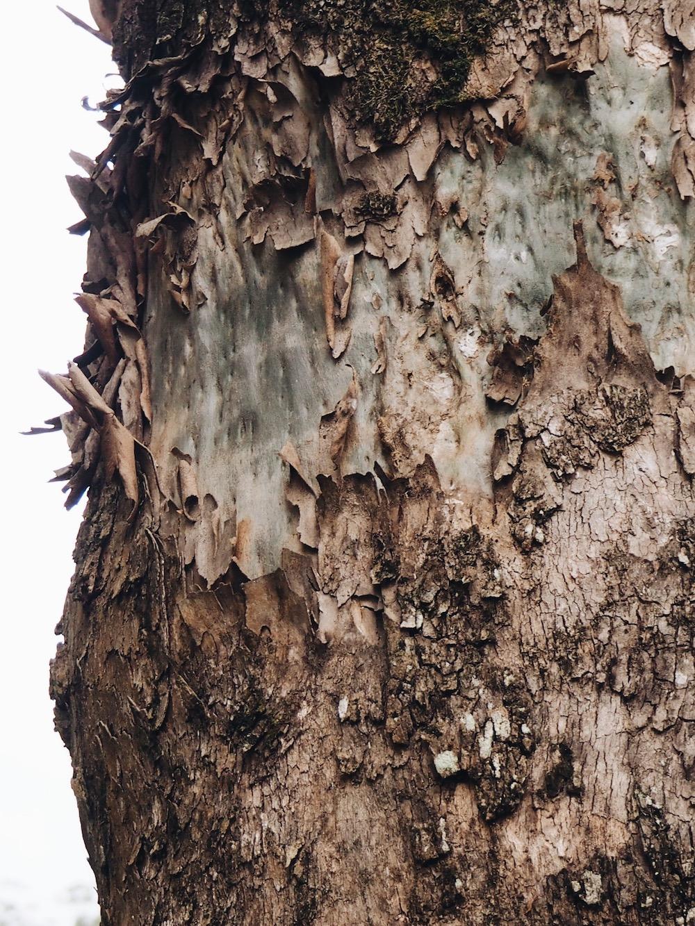 Ellie Beck Petalplum tree bark eco-printing on fabric inspiration.JPG