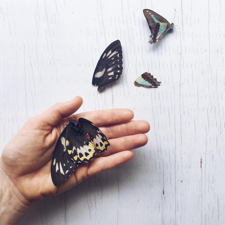 Ellie Beck Petalplum butterfly in hand