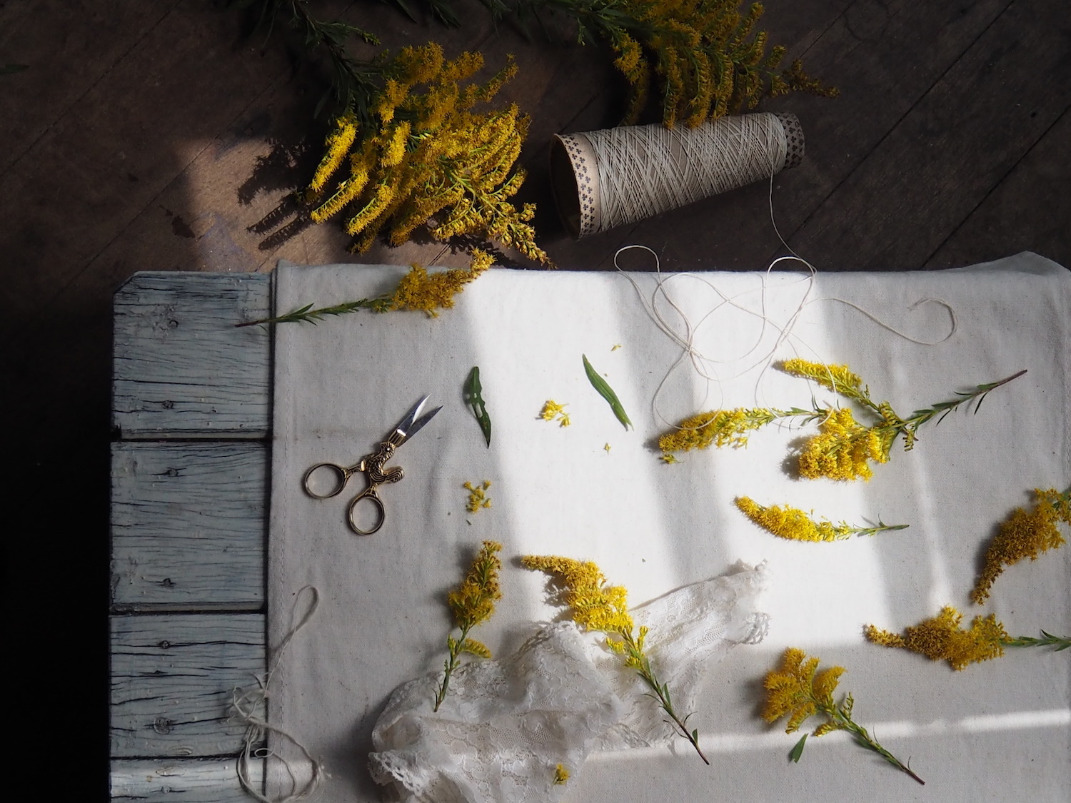 Ellie Beck natural dye with golden rod flowers.jpeg