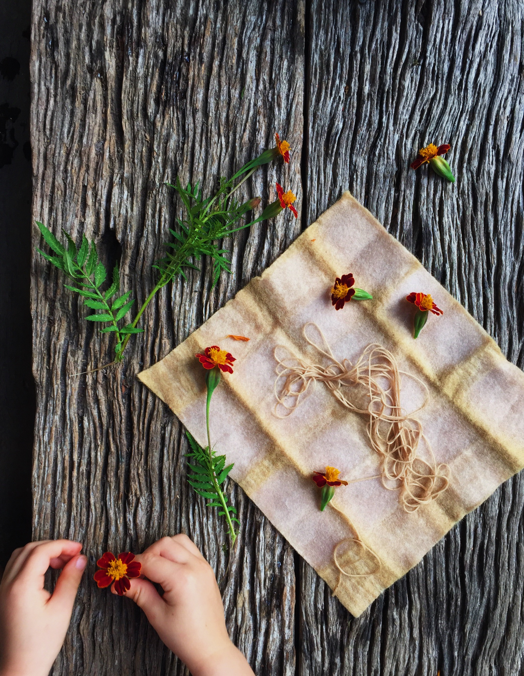 Ellie Beck Petalplum Naturally dyed fabric - dyeing with marigolds