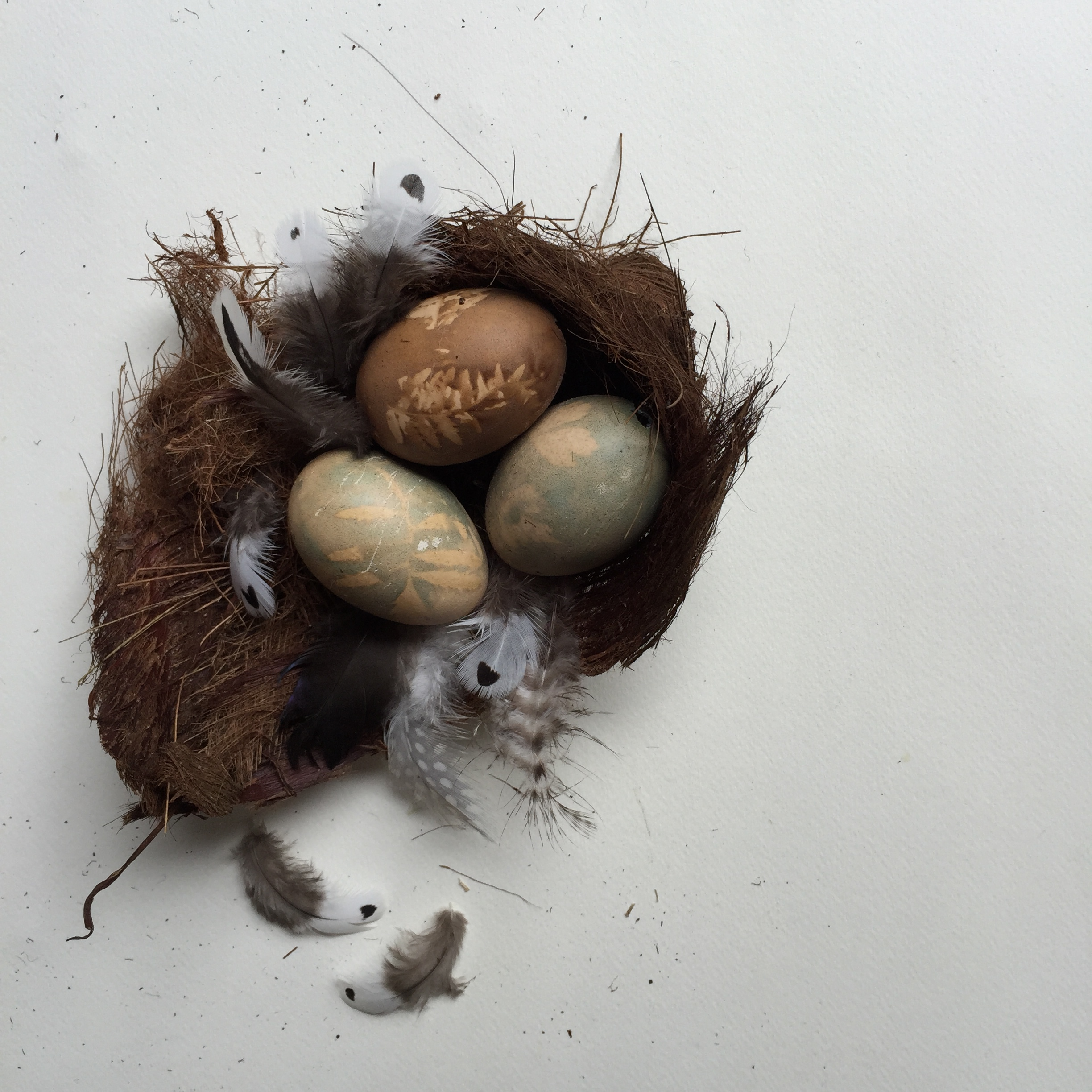 Naturally dyed easter eggs in a nest tutorial by Ellie Beck Petalplum