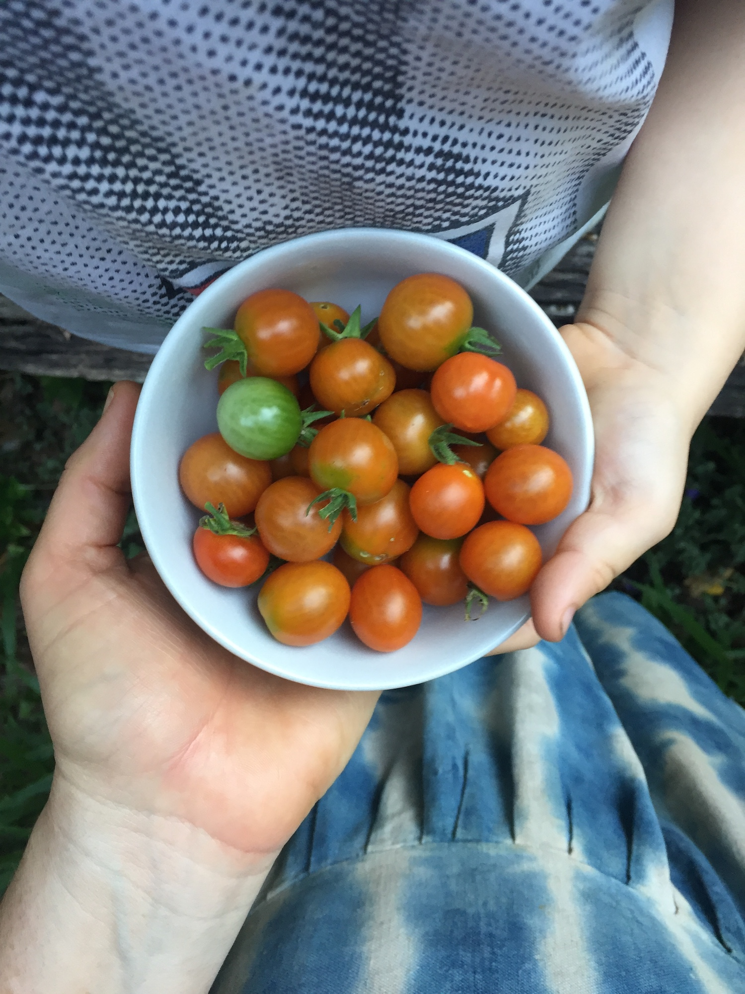 Petalplum blog Mother guilt - mother and child hands holding a bowl of garden  picked tomatoes