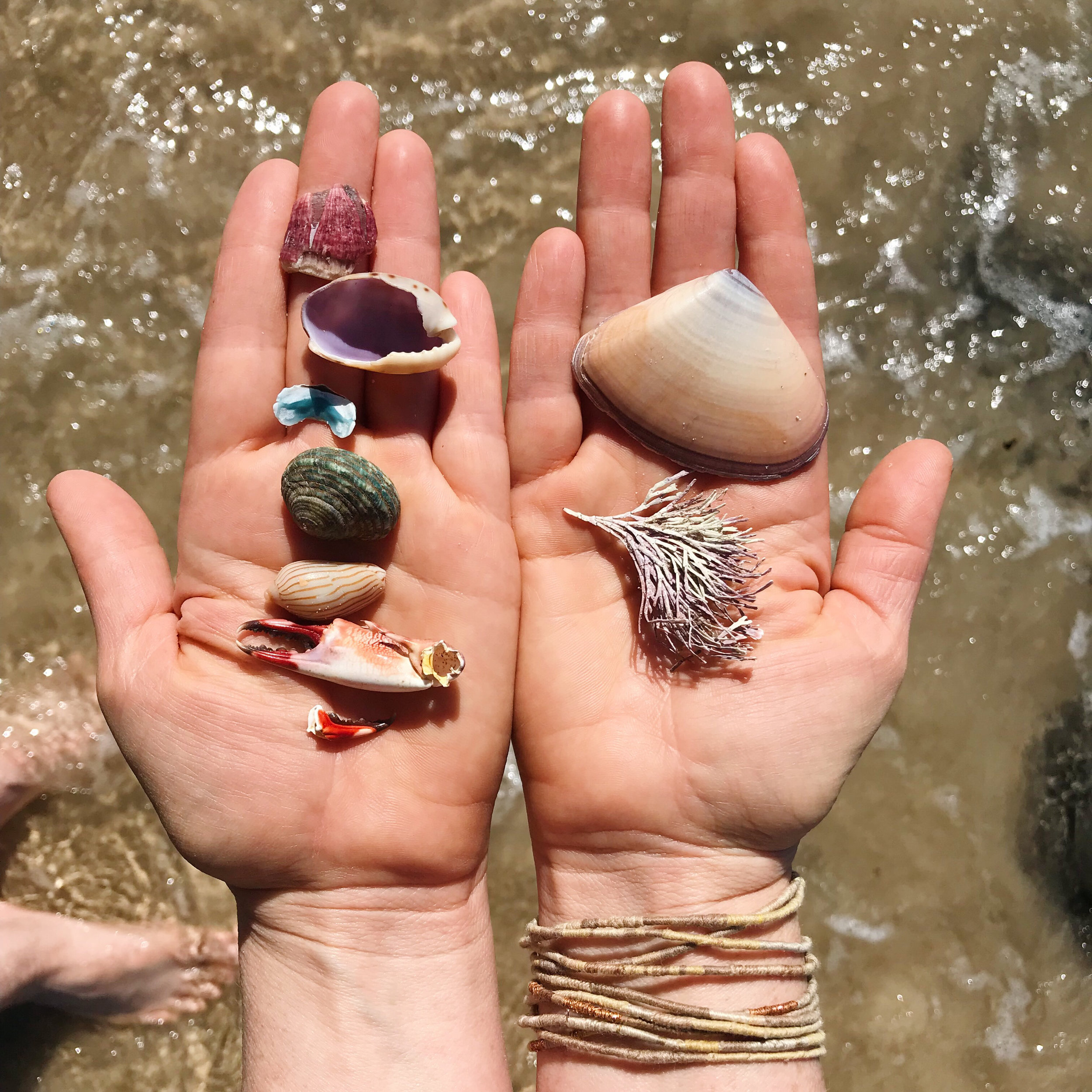 Petalplum blog Creative mamas - finding your voice in the family noise. Shells on hands at the beach