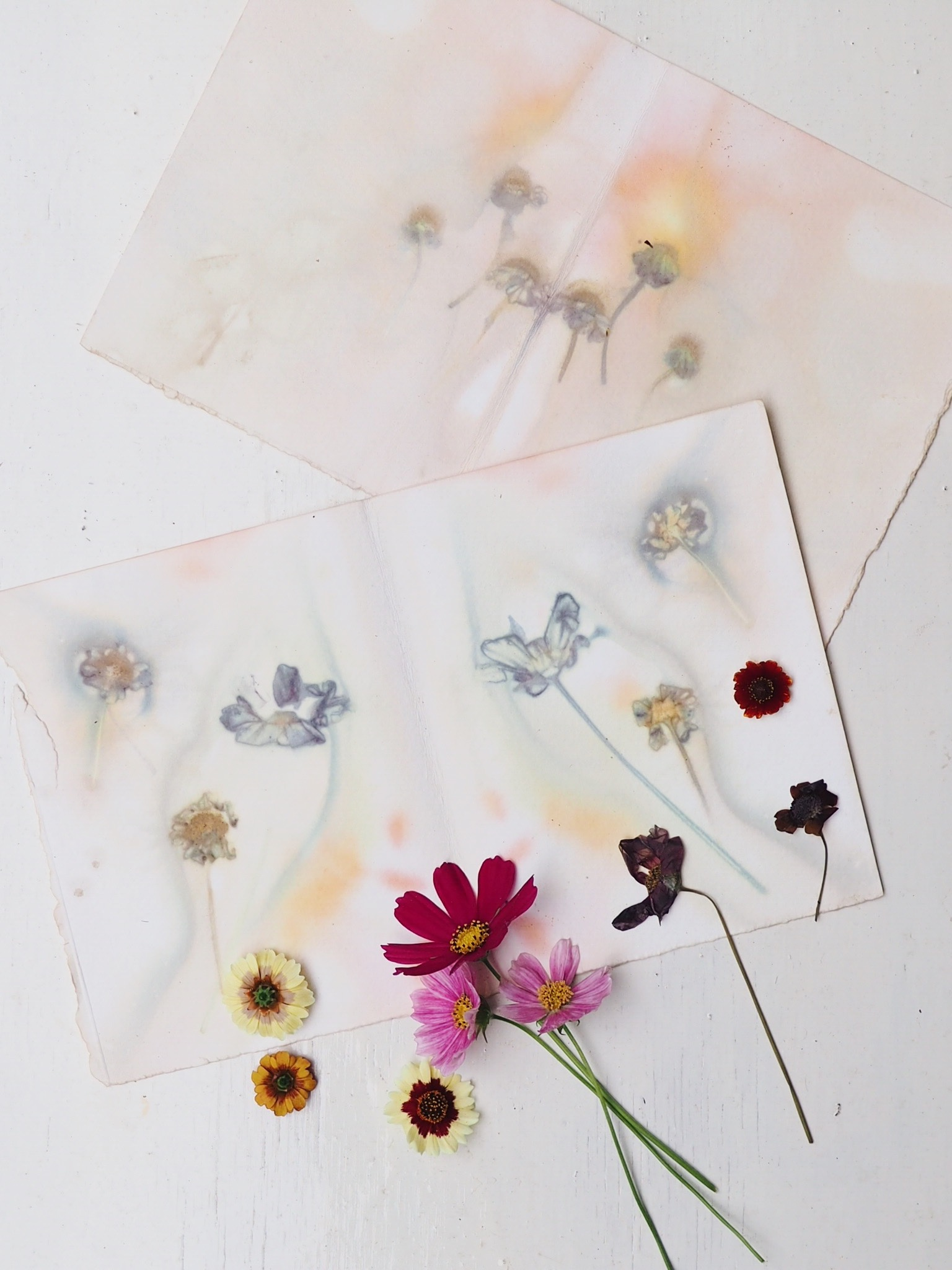 Ellie Beck Petalplum Natural and Botanical dyeing eco printing making patterns and colour with flowers