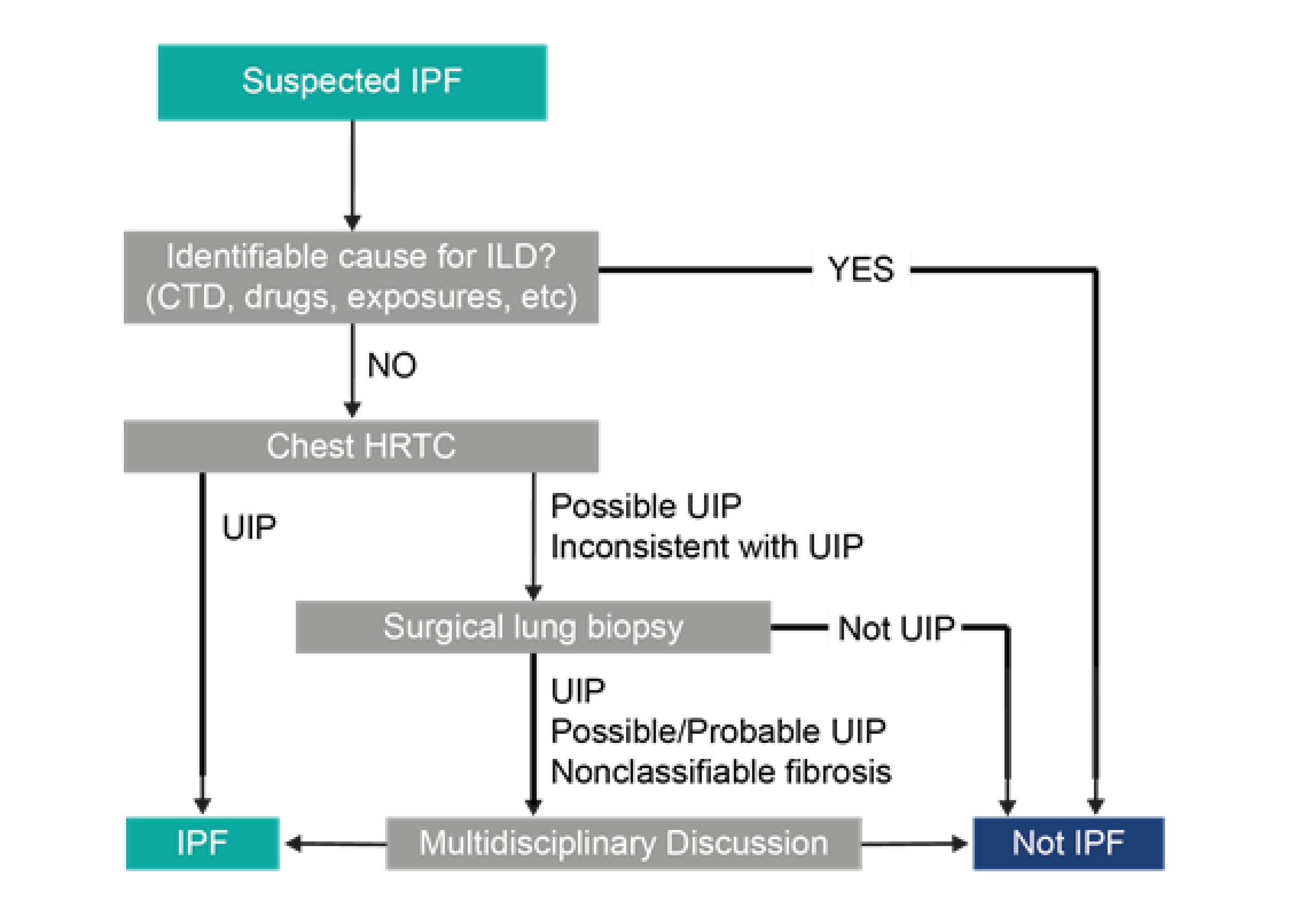 Figure 8: IPF diagnosis patthway (adapted from: ²¹)
