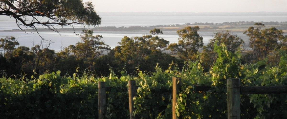 The Gurdies Winery