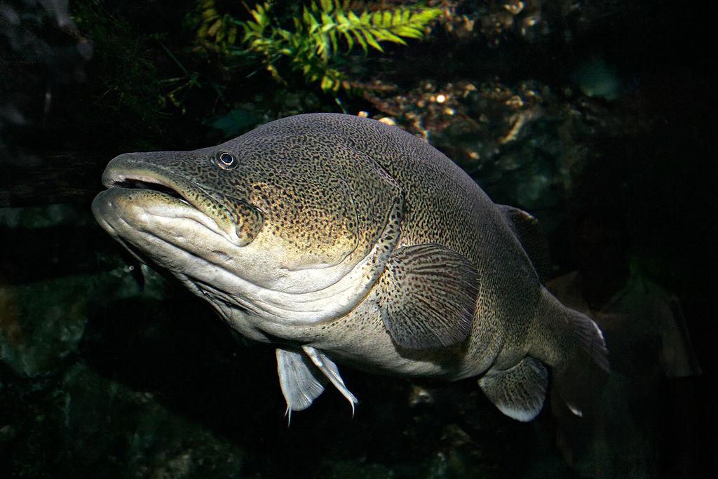 Wikipedia: Fir0002/Flagstaffotos
