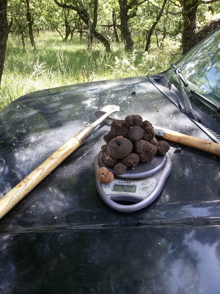 Harvest of Grecian Peloponnese Truffles.jpg