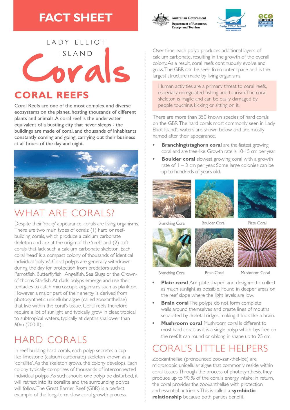 corals.png