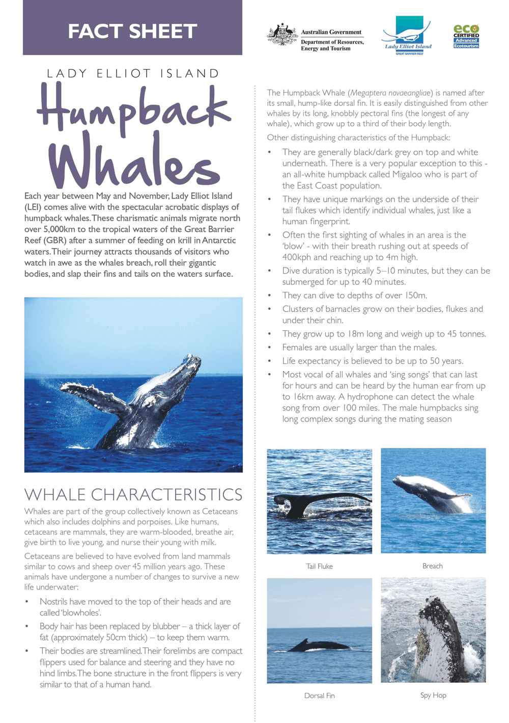 whales.png