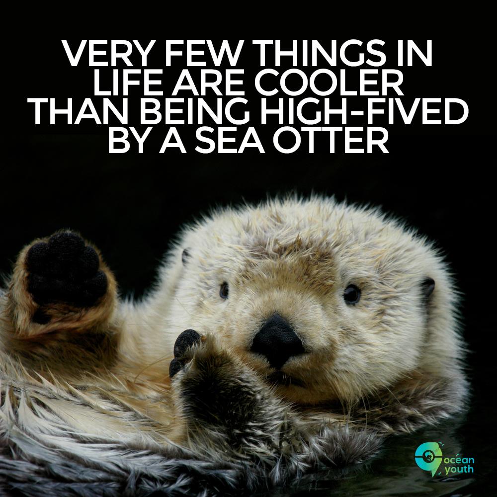 SeaOtterHighFive.jpg