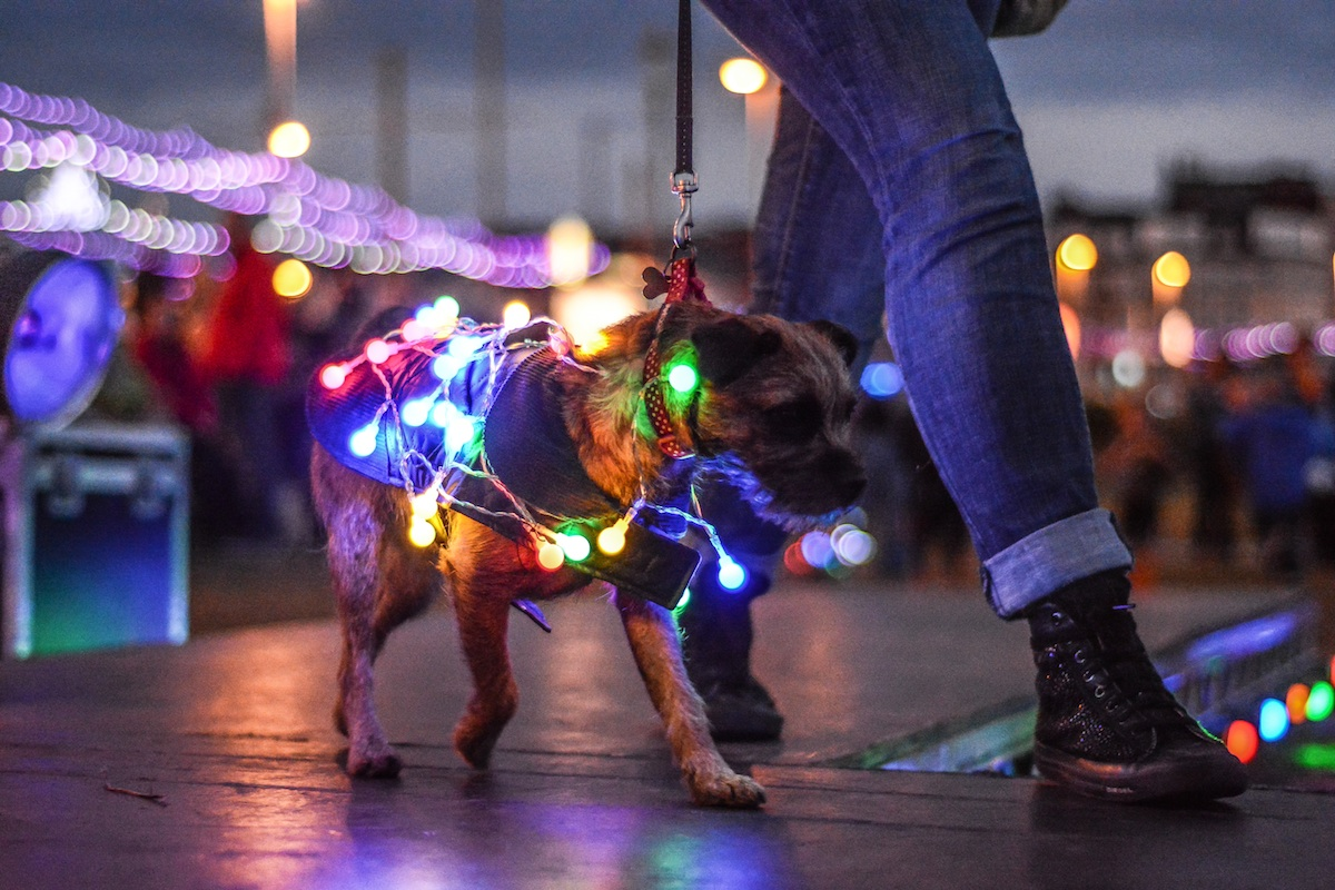 Crufts meets Caberet at the Lumidogs Parade during the Blackpool Illuminations